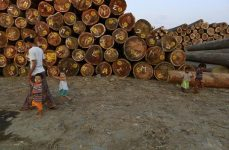 A woman walks with children near logs at a timber yard in Yangon